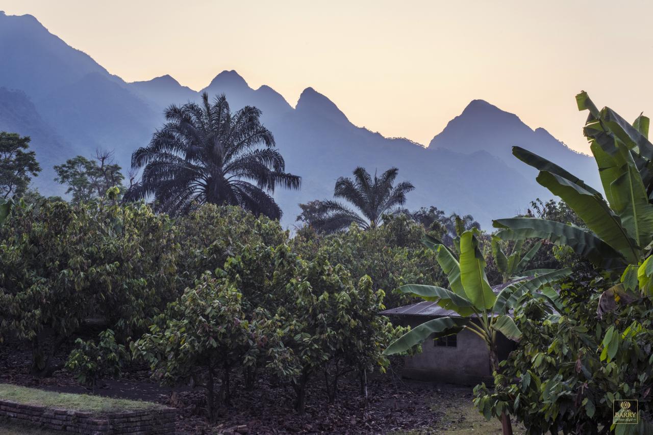 The beautiful Tanzanian plantations