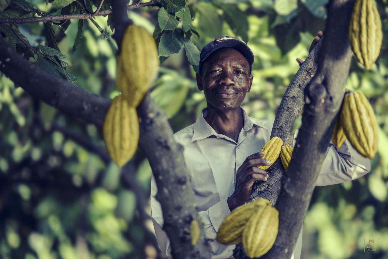 Tanzanian cocoa farmer