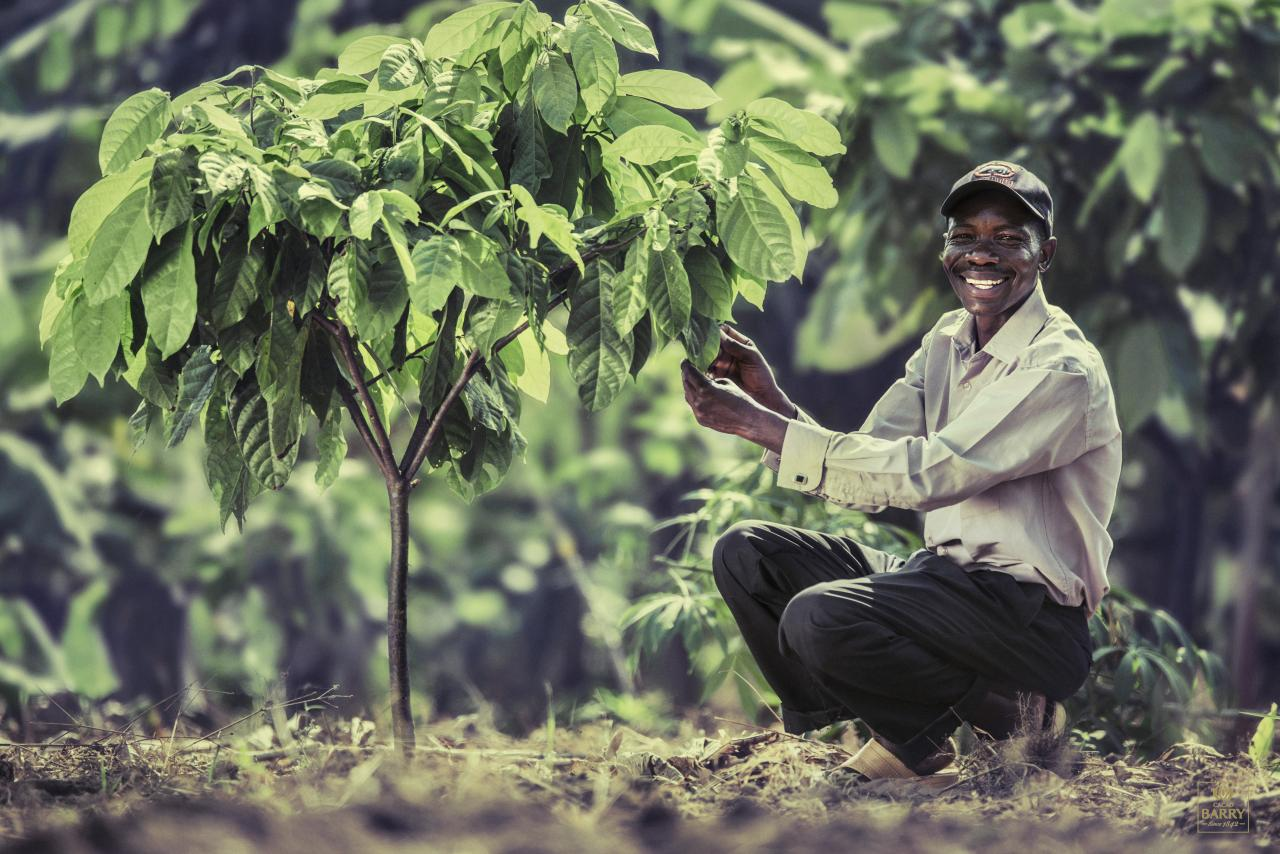 Taking care for the future of cocoa